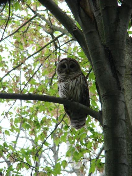 Glen the owl