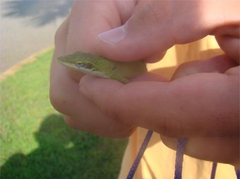Gs gecko