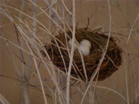 Nest in fr tree