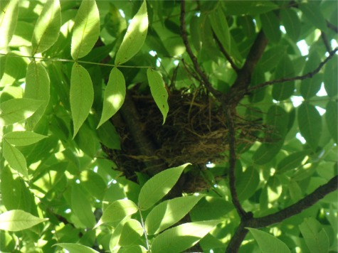 Nest in my tree
