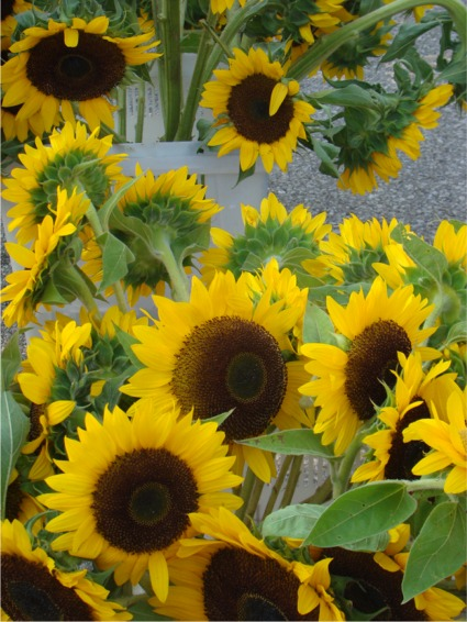 Fmsunflowers