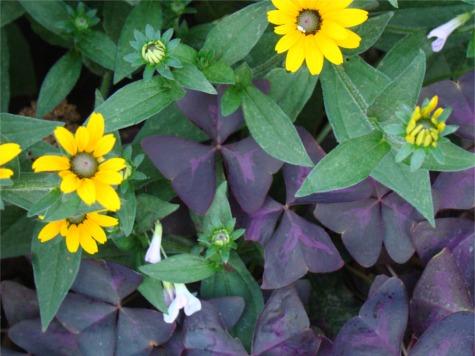 Moms garden 5