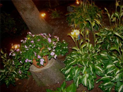 Bday40 garden