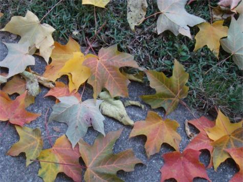 G sick walk leaves