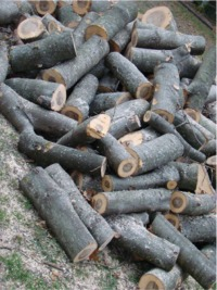 Oak tree logs