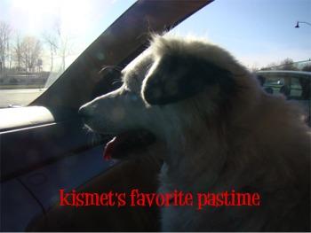 Kismet in the car