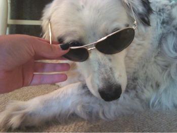 Kismet shades