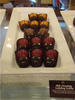 Sweet ladybugs