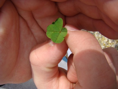 4 clover in hand