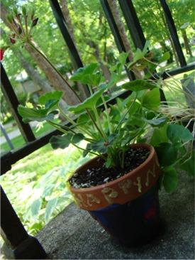 Moms day plant