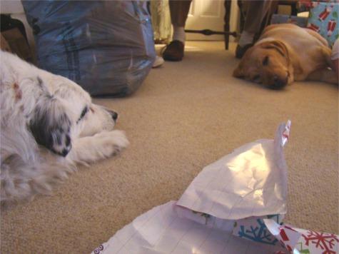 2010 pups