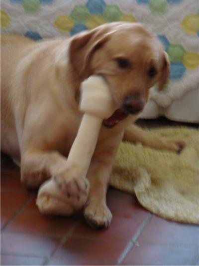 Sunnys bone