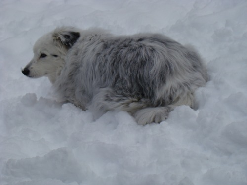 Feb kiz in snow
