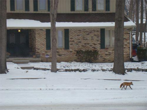 Feb fox house
