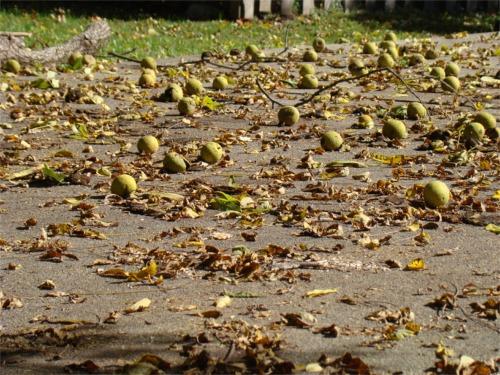 Walnut driveway