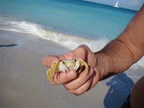 Tc crab pick up