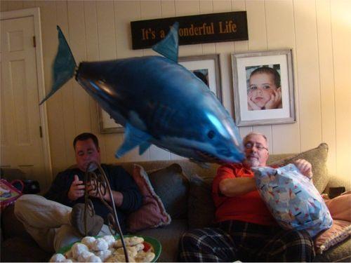 Cmas shark2