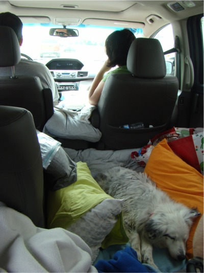 Roadtrip kizz bed