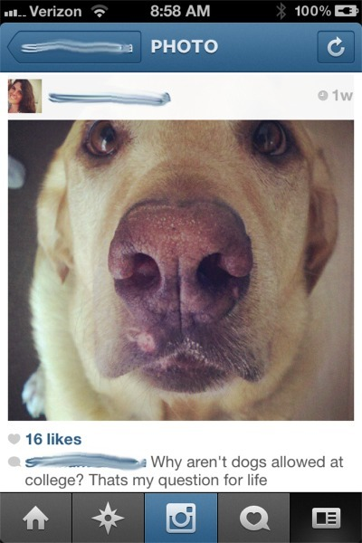 Kate instagram