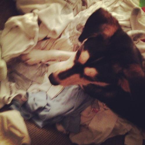 Abe laundry