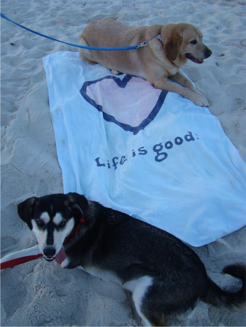 Life is good dogs