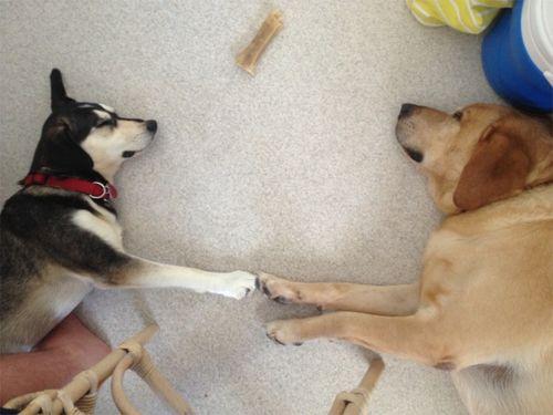Brotherly dog love
