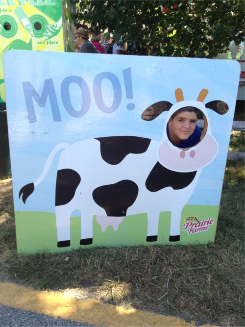 Cute cow at the fair