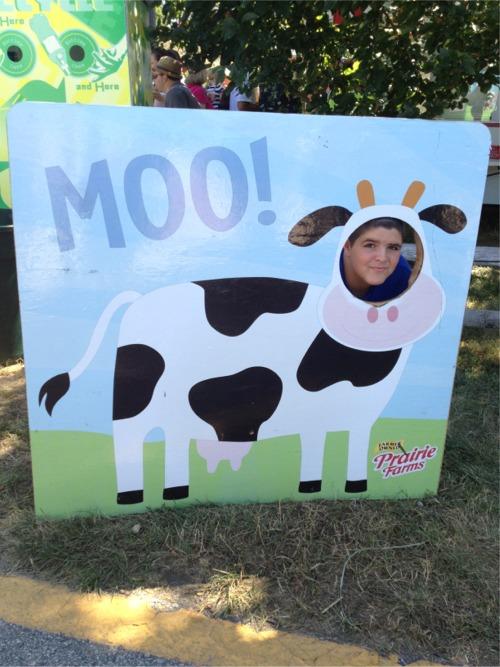 Cute cow at the fair