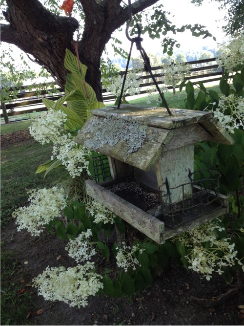 Sweet meadow farm birdfeeder