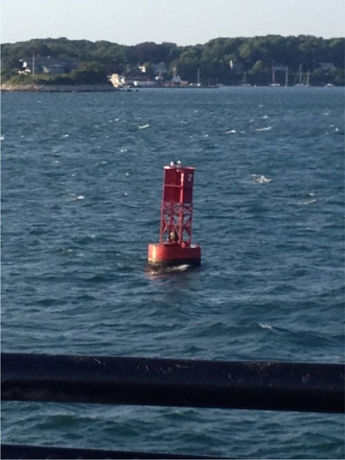 Cape cod sea buoy