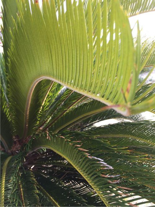 Gs palms