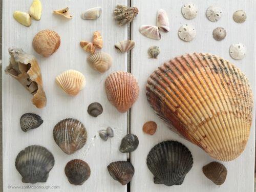 Seaside harvest
