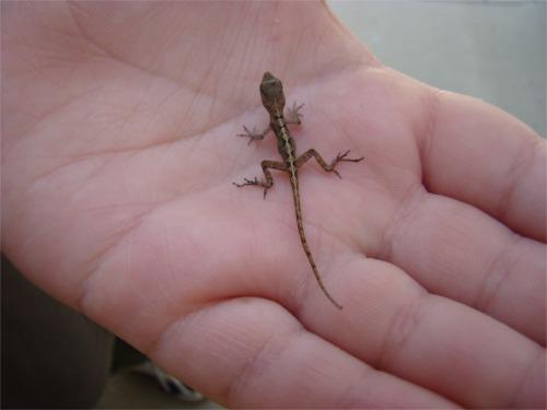 Mark_the_gecko